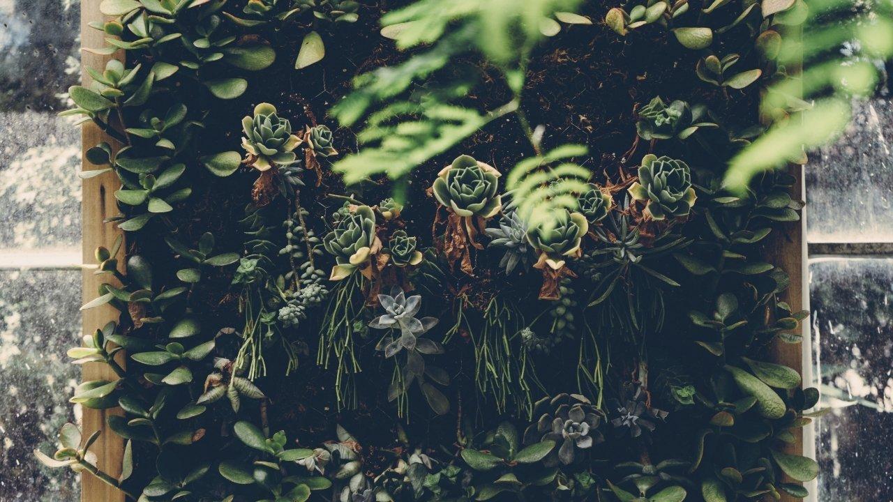 como hacer un jardin vertical de suculentas colgantes