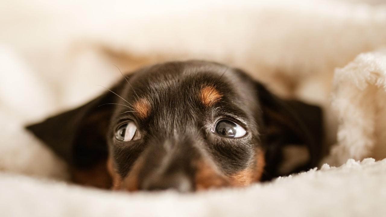 ruidos a los que los perros tienen miedo