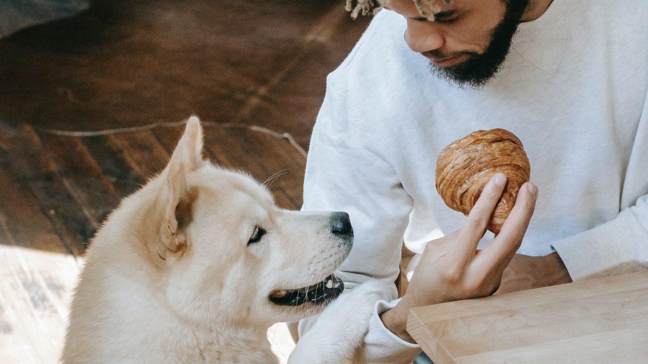 que causa el chocolate en los perros