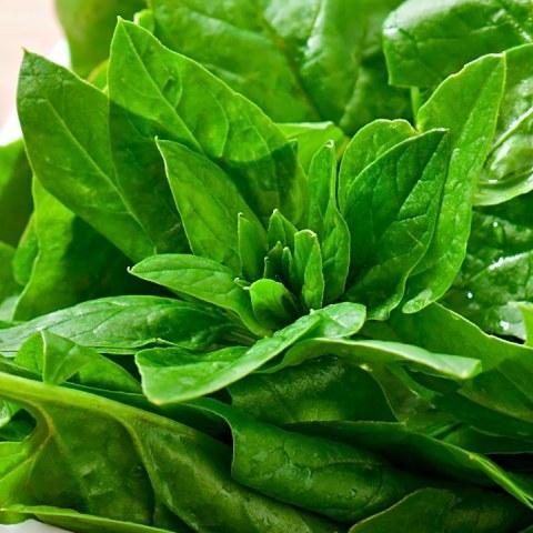como guardar almacenar conservar espinacas frescas bonitas en el refri