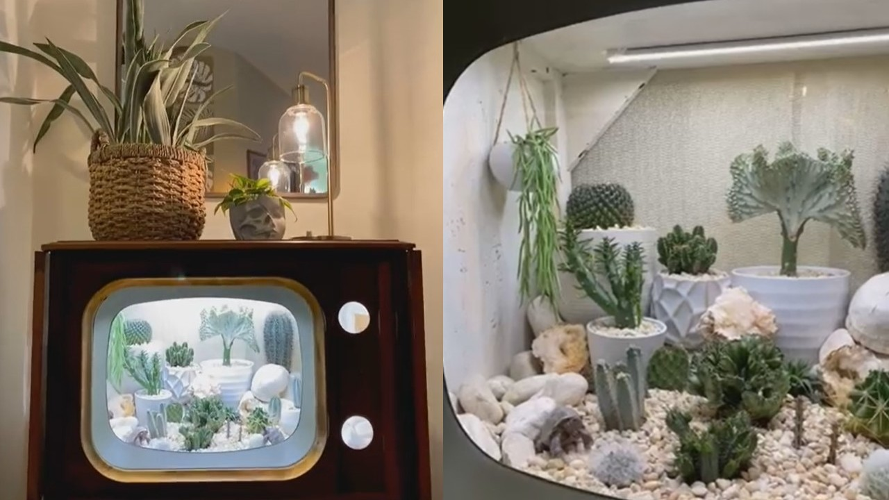 convirtio su televisión en terrario terrarium