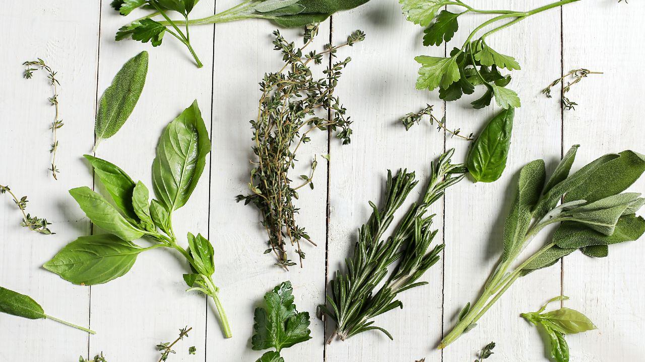 plantas aromáticas romero albahaca menta yerbabuena