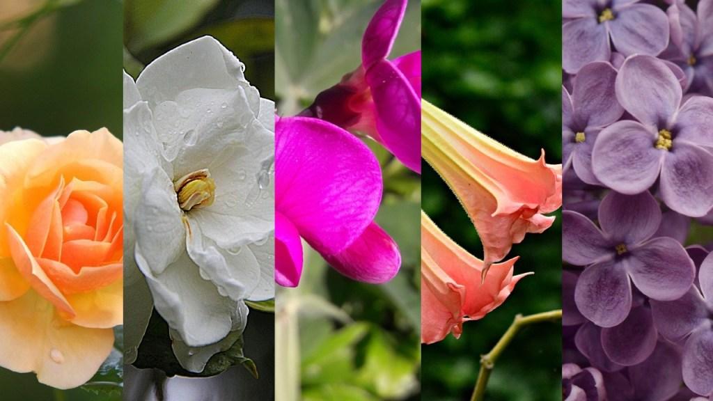 flores para perfumar el hojas especies plantas