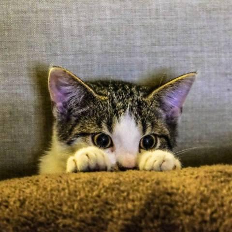 gatos pueden ser inestables como sus amos