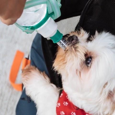 es peligroso darle agua de la llave a tu perro