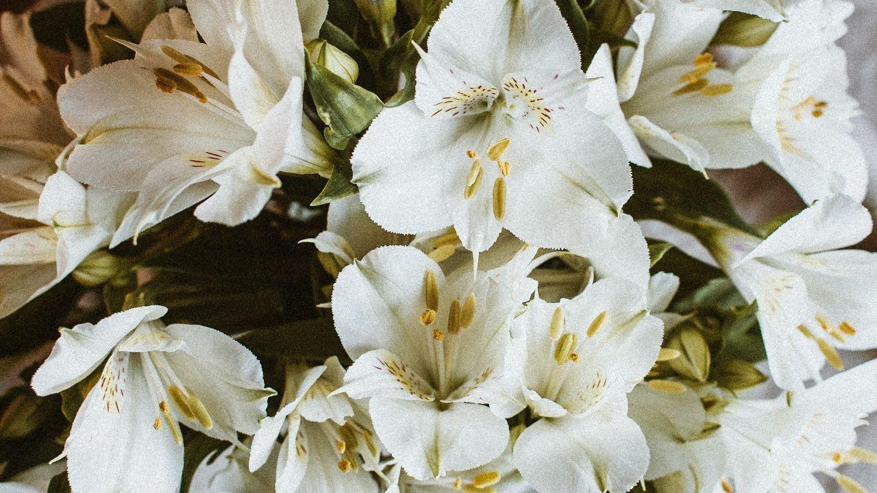 flores mas lindas para regalar dia de las madres