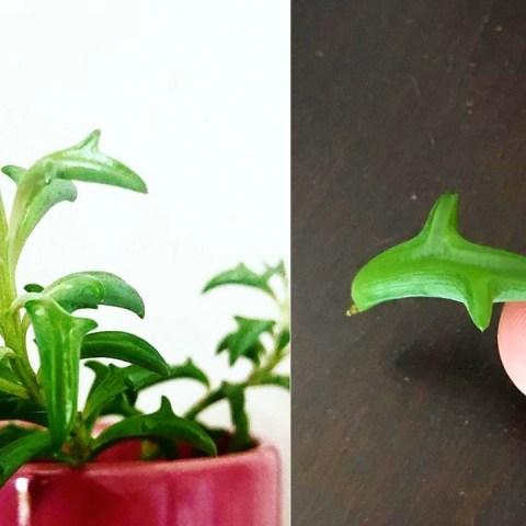 suculentas en forma de delfín plantas con estilo marino