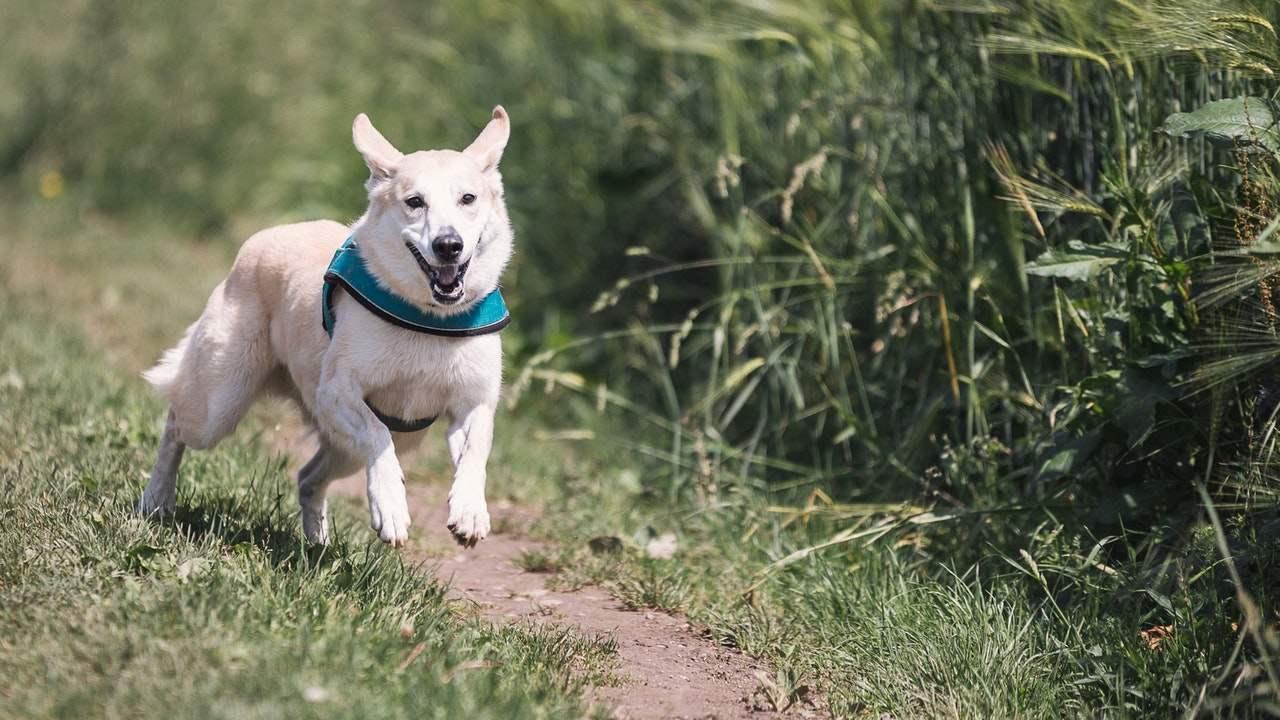 Por que mi perro empieza a correr de la nada veterinarios expertos