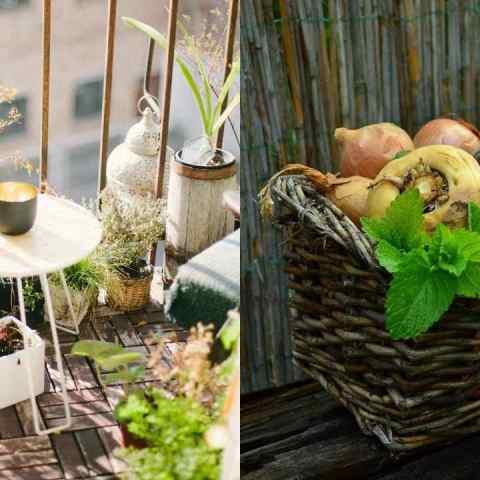Cultiva hortalizas en tu balcón: Te decimos cómo empezar