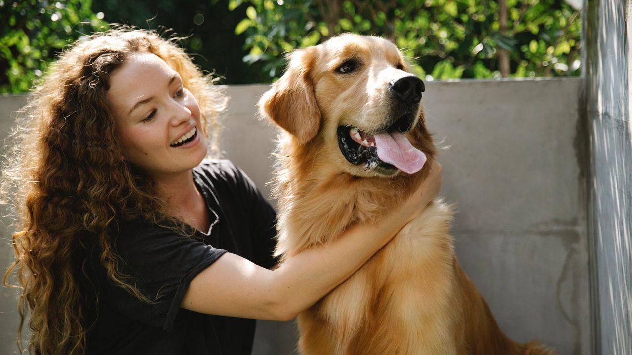 perros golden retriever por qué suben de peso