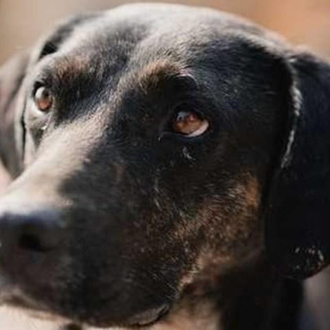 perros en adopcion en cdmx