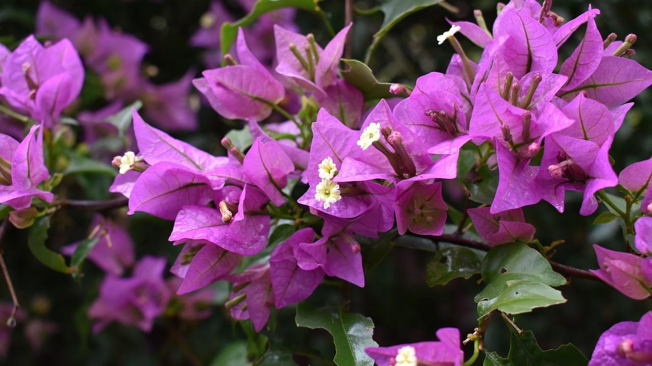 tips de jardineria para azotea