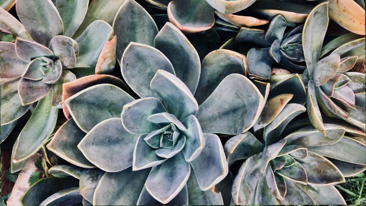 plantas de interior con pruina