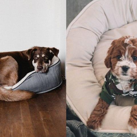 Camas para perros con ropa vieja paso a paso