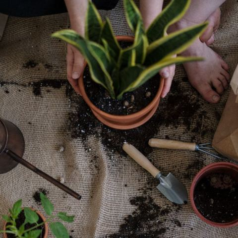 jardineria para quienes no tienen mucho tiempo