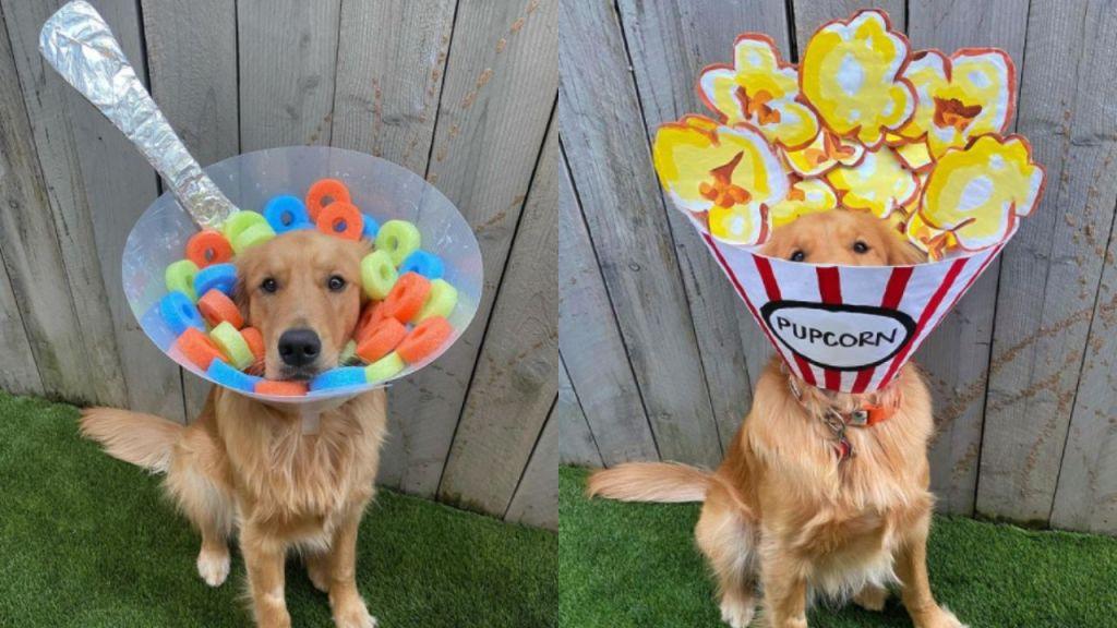 La dueña de este perro decoró su cono todos los días