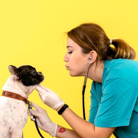 Por qué mi perro vomita amarillo