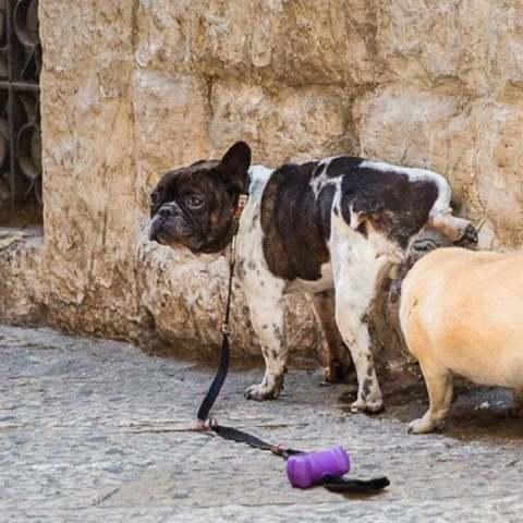 truco natural para ahuyentar a los perros
