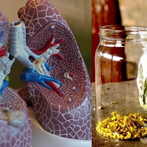 fortalecer los pulmones con plantas medicinales