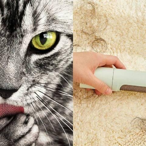 trucos faciles para quitar pelos de gato de ropa