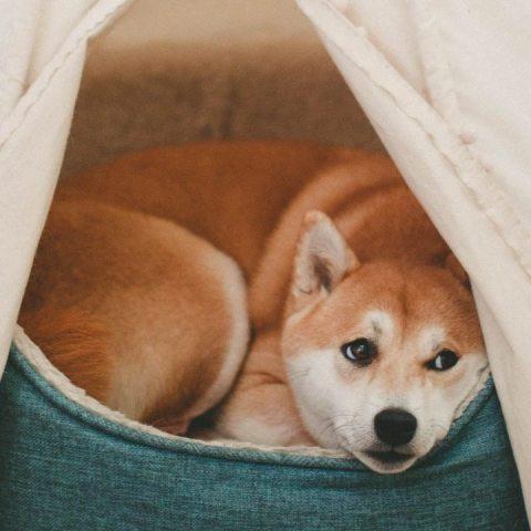 forma de limpiar la cama de tu perro