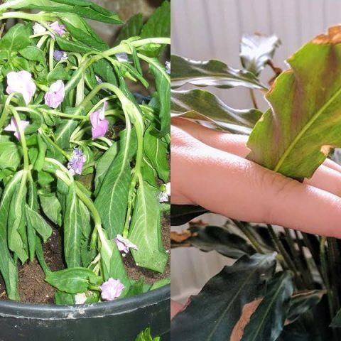 que hacer con plantas estresadas como identificar