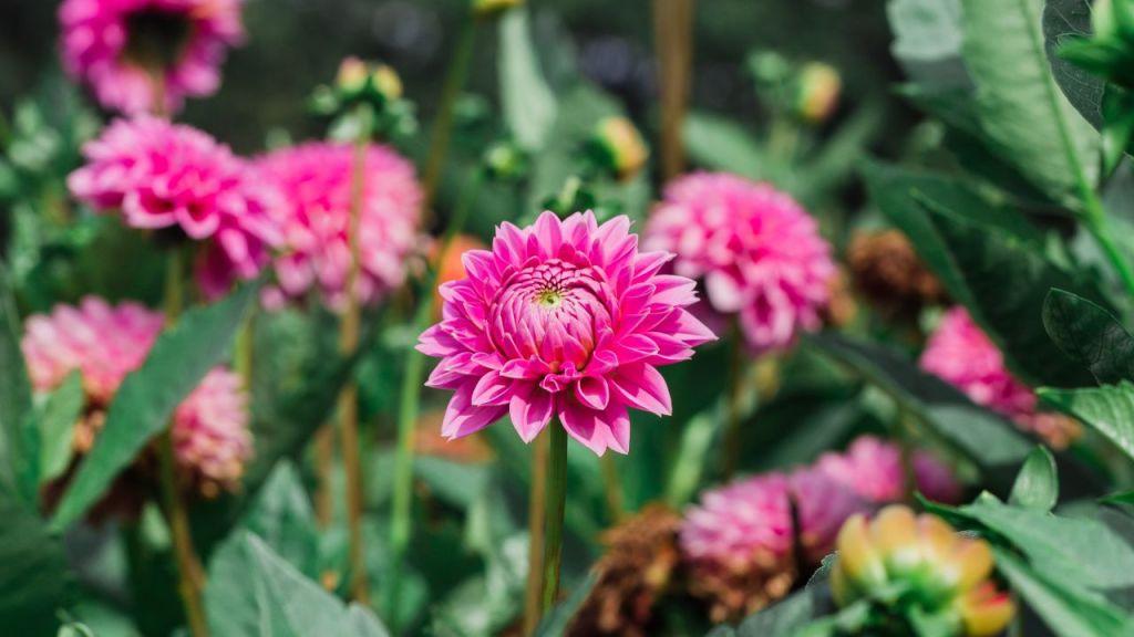 Fertilizante de avena para tus plantas