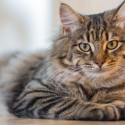 nombres para gatos recomendados
