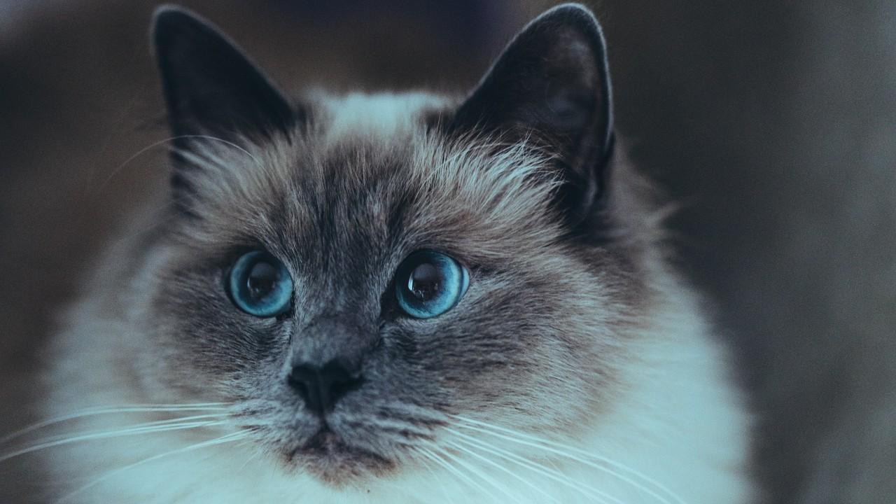 gatos más tiernos