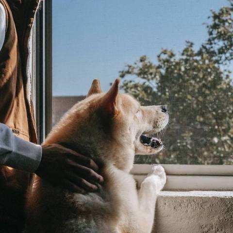 perro significado ver por la ventana