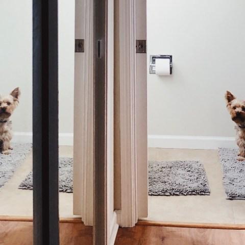 trucos para que tu perro no te siga al baño