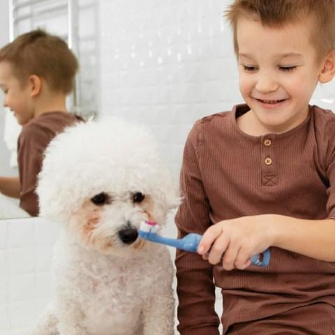 cómo limpiar dientes de tu perro