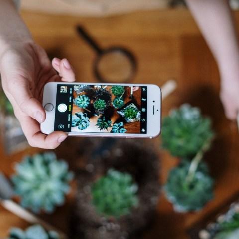 apps para identificar plantas