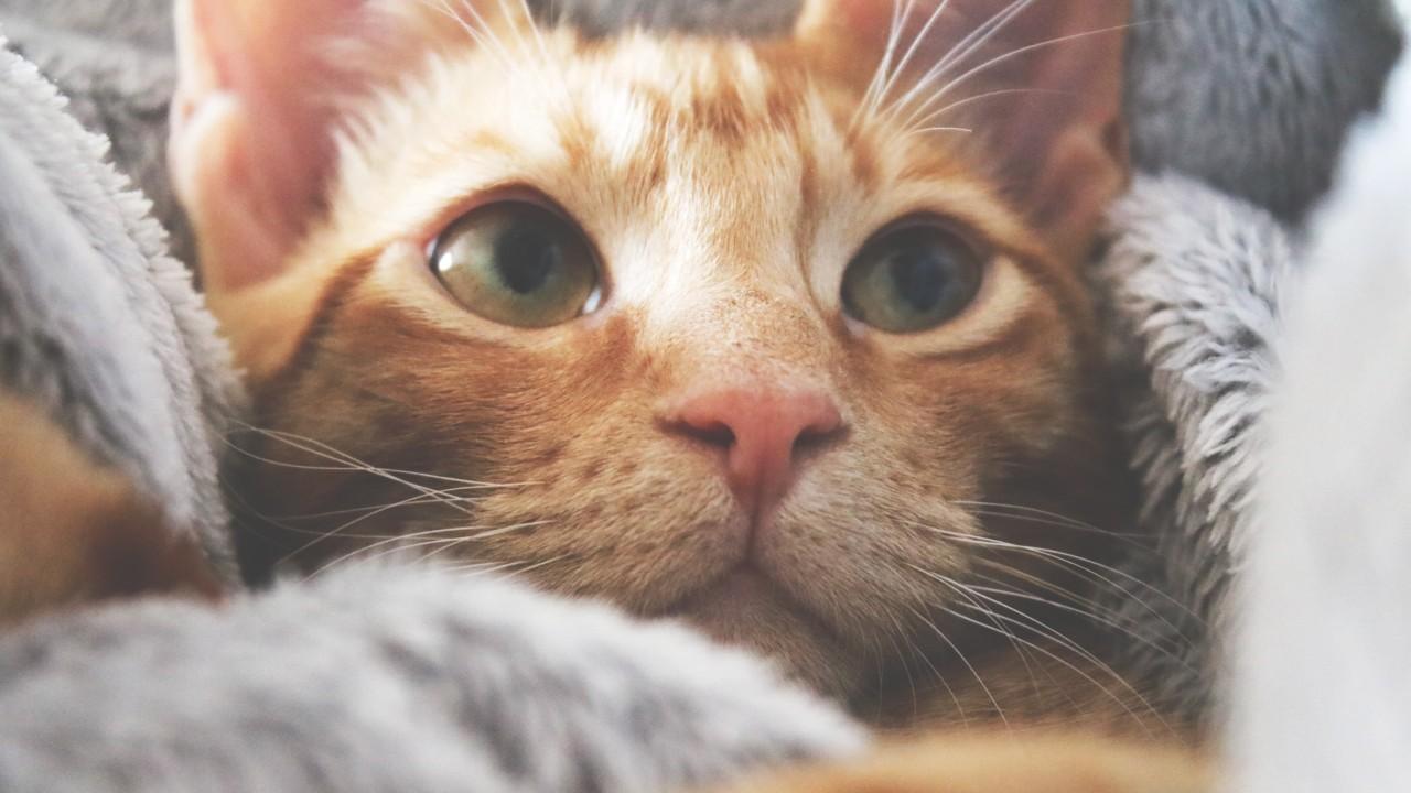 por que mi gato me mira fijamente