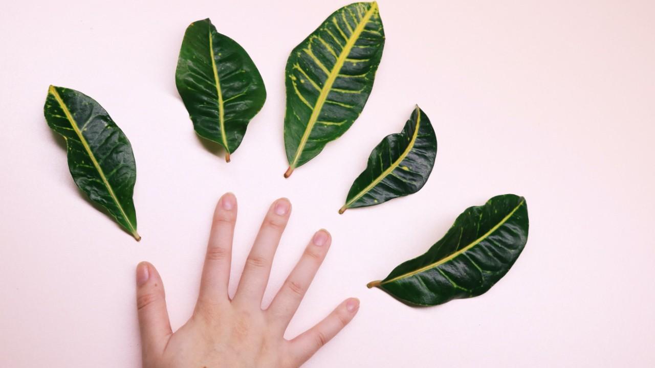 planta con hojas pegajosas qué hacer