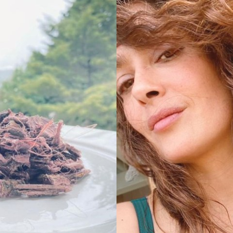 Tepezcohuite, el secreto de belleza de Salma Hayek