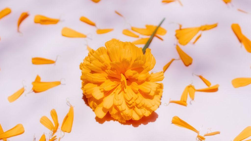 Cuál es el origen de la flor de Cempasúchil