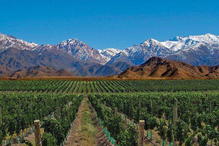 Mendoza, tierra de vinos