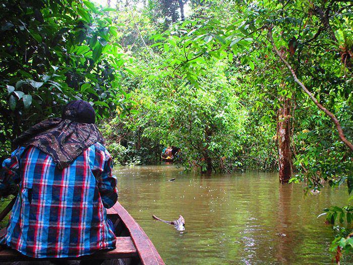 Camino al campamento Pacaya Samiria