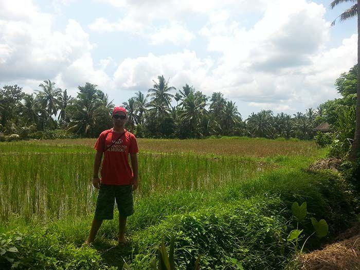 Arrozal en Ubud Bali