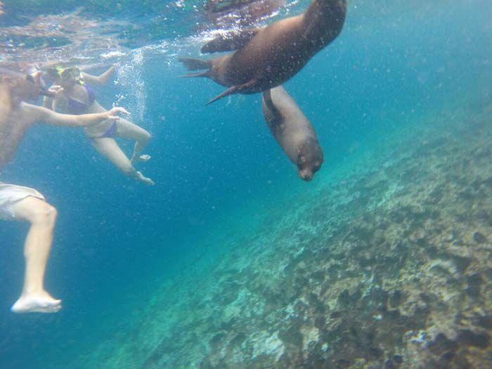 Buceando con leones marinos en Islas Galápagos, Ecuador