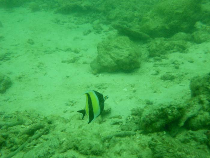 Snorquel en Koh Phi Phi Tailandia