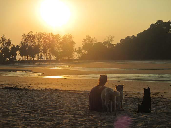 Koh Phra Thong atardecer perros