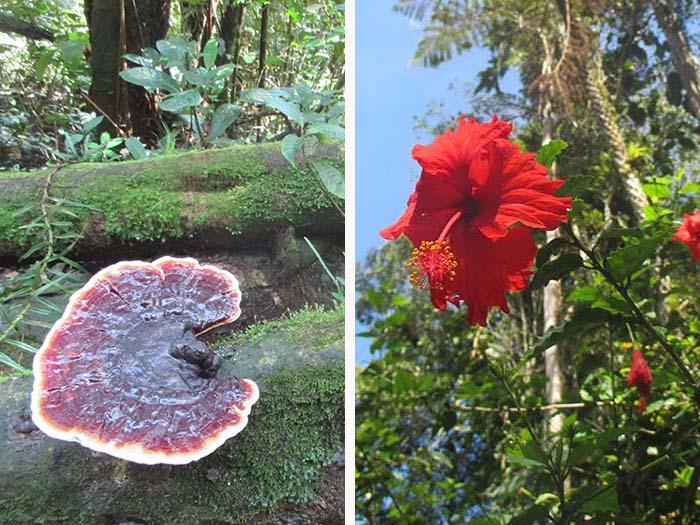 Visitar Mossy Forest y las granjas de fresas y miel