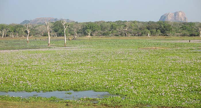 ¿Te recomendamos que hagas este safari en el Parque Nacional Yala?