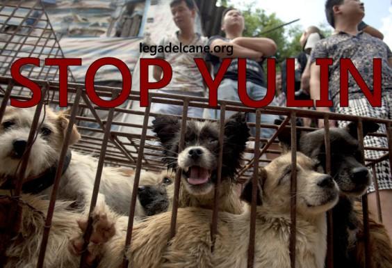 yulin massacro cani