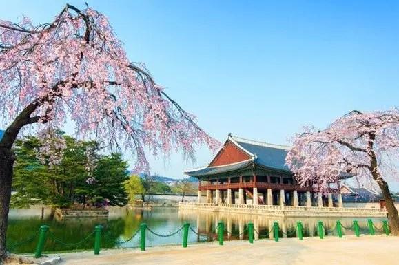 becas del gobierno de corea