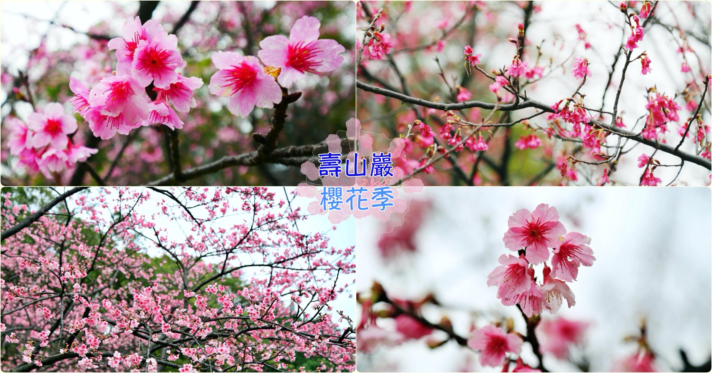 閱讀文章:[龜山旅遊]壽山巖觀音寺.壽山櫻花園|桃園市區附近最大片櫻花園~免費景點.預計二月底盛開
