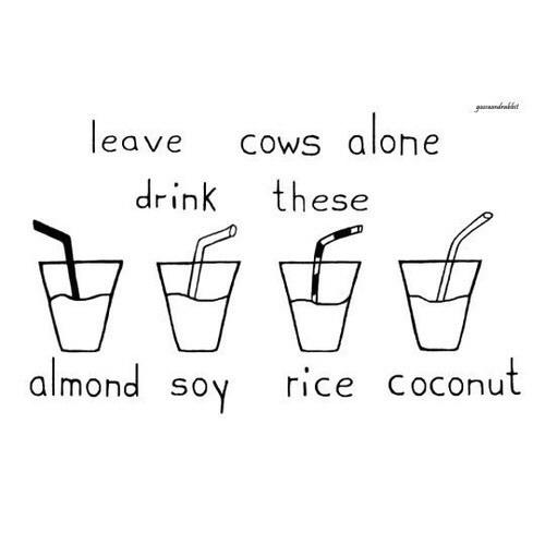 Voor welke plantaardige melk kan je het beste kiezen?