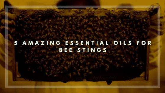5 Amazing Essential Oils for Bee Stings-Vivorific Health